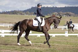 Dressage & Trot Up